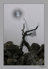 http://www.ritcenter.ru/uploads/posts/2011-10/1318250238_witchs-mist.jpg